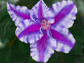 Clematis, digital
