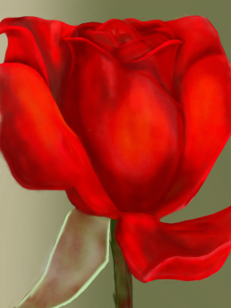 Red rose, digital