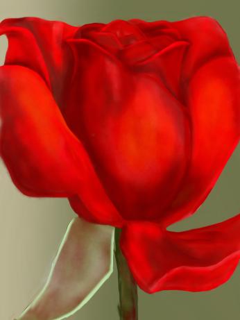 Red rose, digital